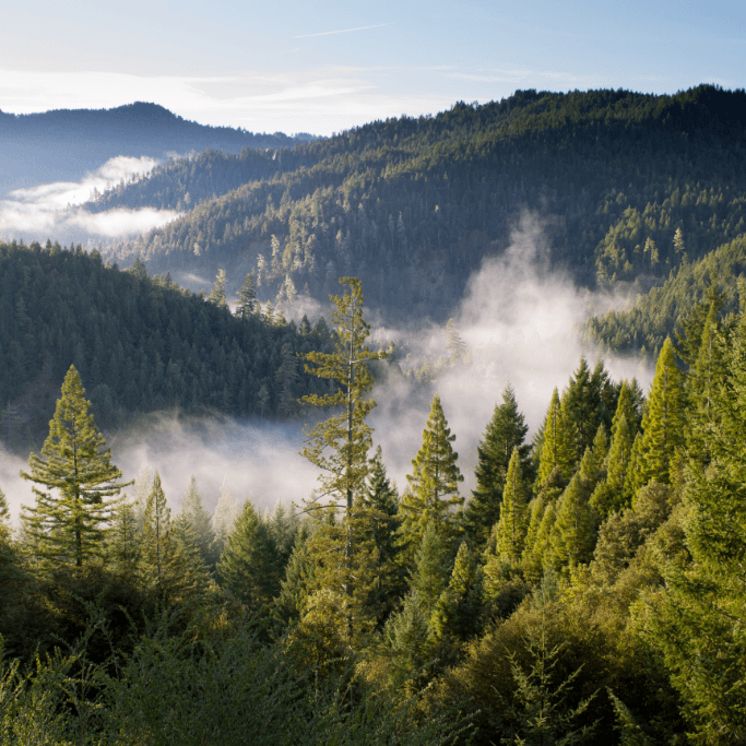 Tři ekologické projekty, které stojí za to sledovat