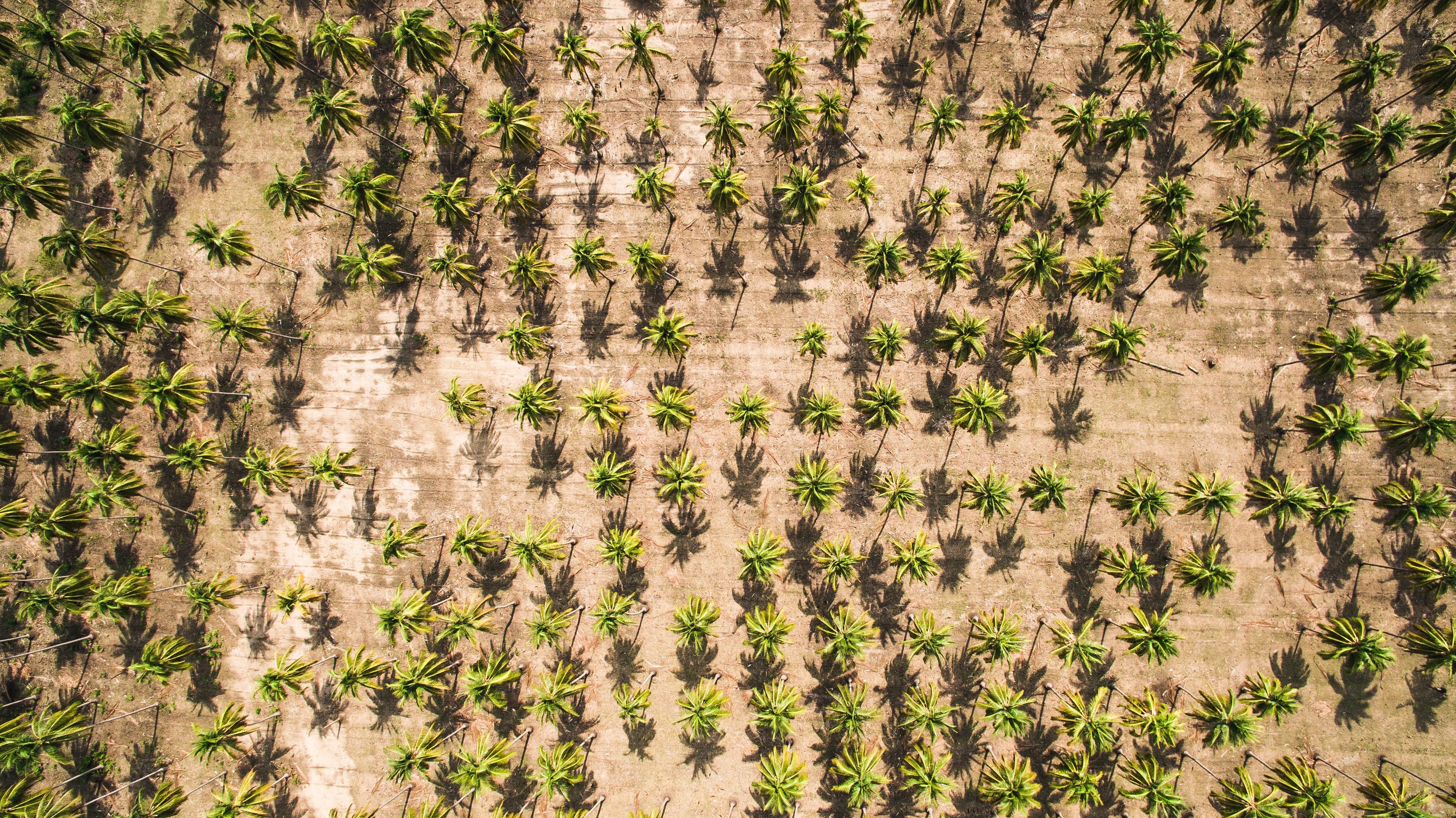 Proč jsem řekla ne palmovému oleji