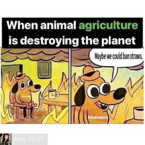 Být či nebýt vegetarián